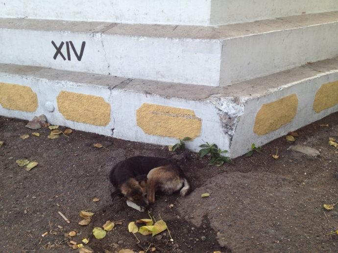There are also stray dogs in Cartagena - quite a lot  They are really good at crossing busy roads. Plus the local drivers are more inclined to stop for them than tourists
