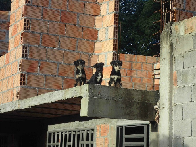 Three pups watch us cycle by