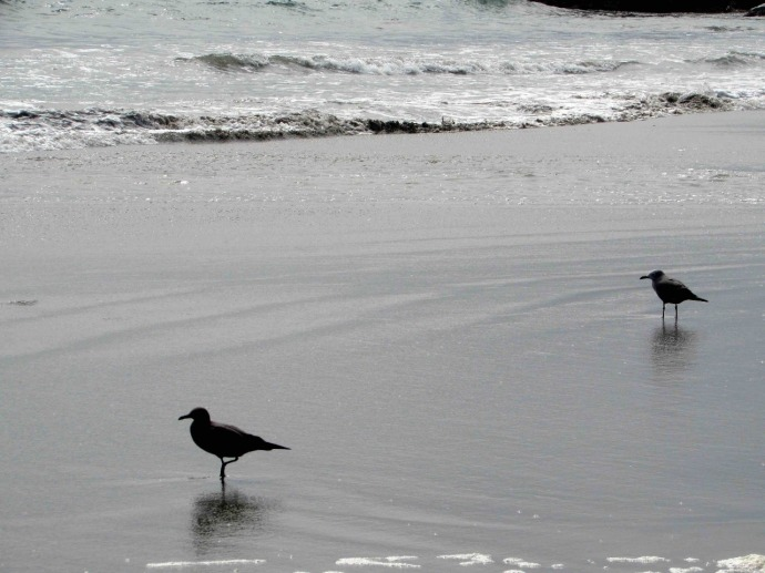 Seabirds fishing in the shallow waves (Photo and caption credit: Sue's blog)