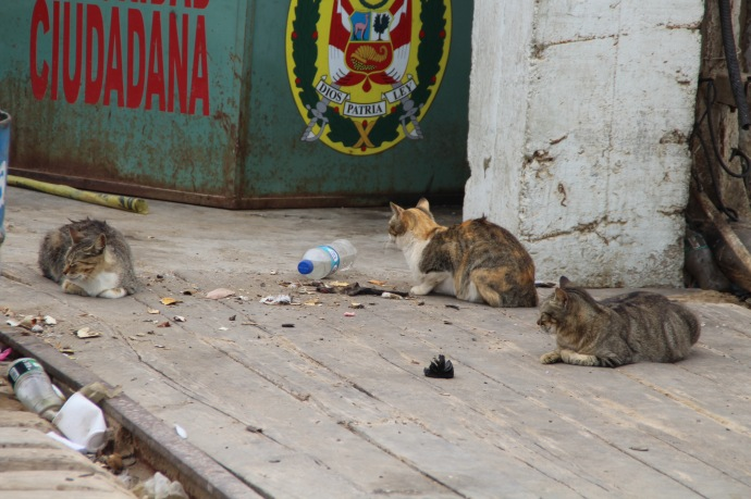 Cats sitting by fish market on pier in Pacasmayo
