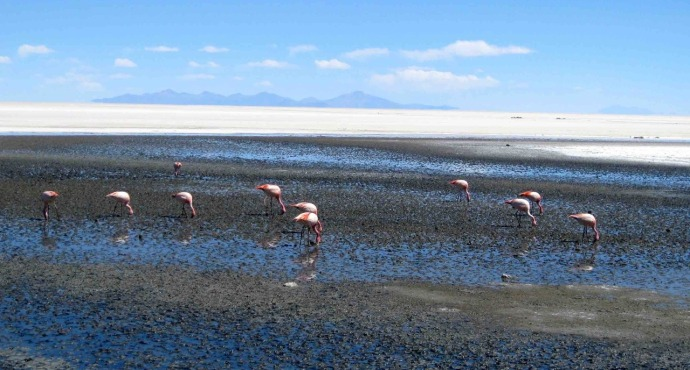Flamingo on the salt flats periphery (Photo credit: Sue's blog)