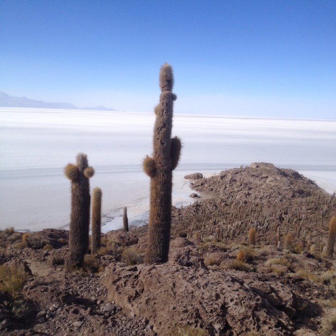 Cacti on Island with salt flats (Salar de Uyuni) in the background