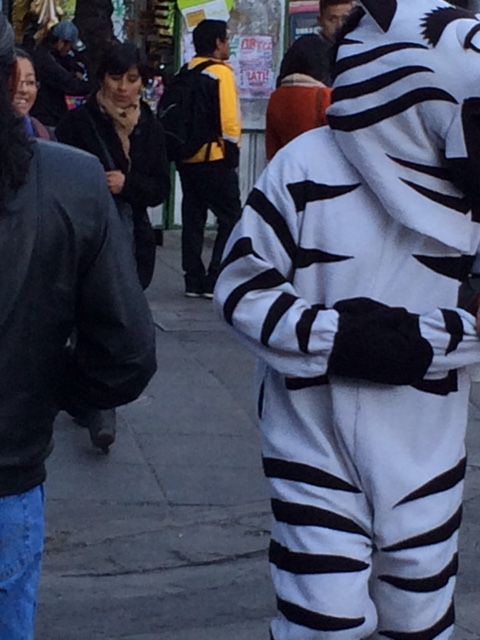 people dressed up as Zebras at the Zebra crossings in rush hour traffic to help people across. Unfortunately not a good photo