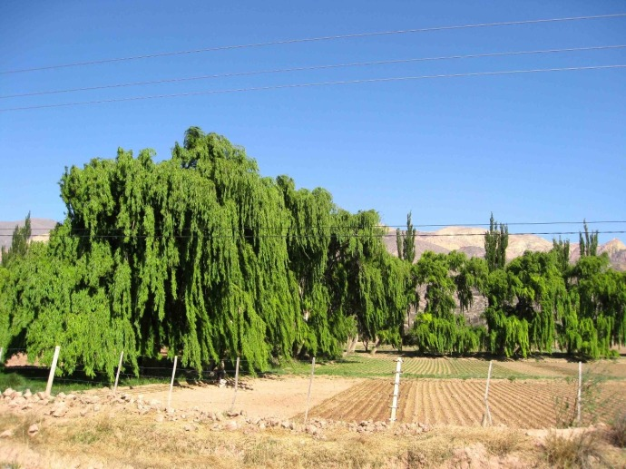Beautiful trees (Photo credit: Sue's blog)