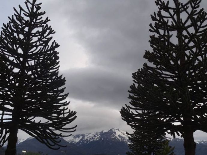 Monkey puzzle trees framing the distant snow capped mountains (Photo credit: Jo's Facebook page)