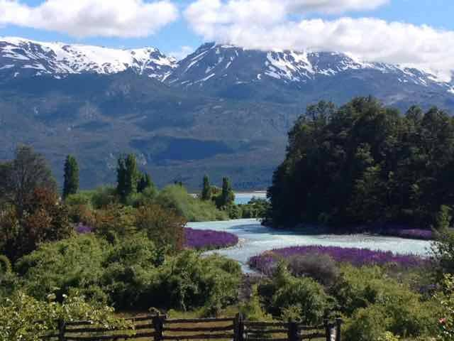 Masses of deep purple lupins fringe the rivers (Photo credit: Jo's Facebook page)